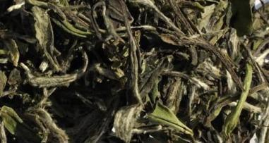 China White tea